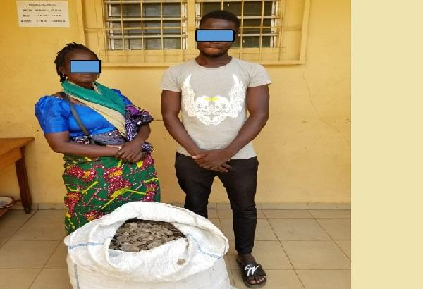Togo : deux trafiquants arrêtés à Lomé pour le commerce de 37 kilogrammes d'écailles de pangolin