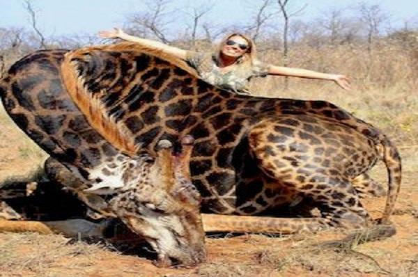 Espèces en voie de disparition : une chasseuse américaine tue une girafe et choque largement les réseaux sociaux