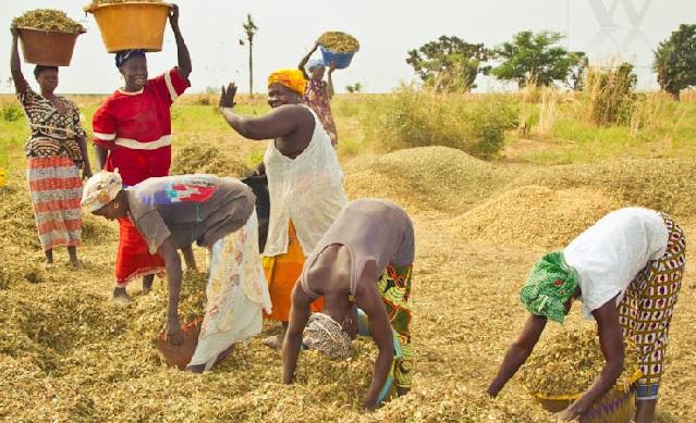 Agriculture-Tendances de la production : Les premières prévisions de la production mondiale 2019 de céréales positives