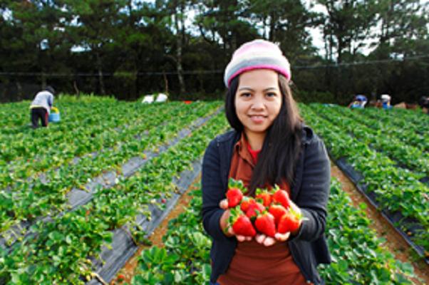 Accroître les revenus et réduire la pauvreté rurale : le FIDA et les Philippines vont consacrer 95,1 millions de dollars à l'essor de l'entrepreneuriat agricole