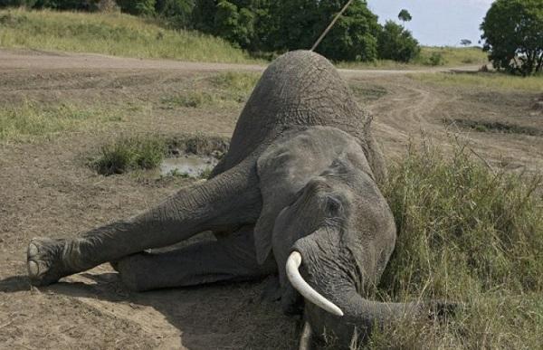 Disparition accélérée des espèces, de l'importance de restaurer la biodiversité