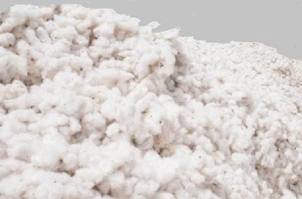 Journée mondiale du coton : La durabilité de la filière du coton est indispensable au développement rural