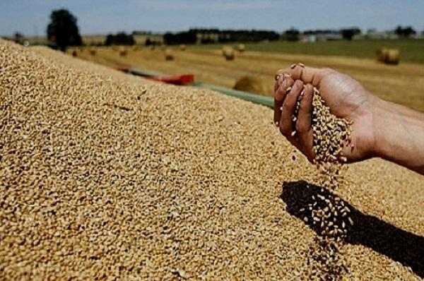 Prévisions mondiales : la FAO annonce une hausse record de la production de céréales pour 2019