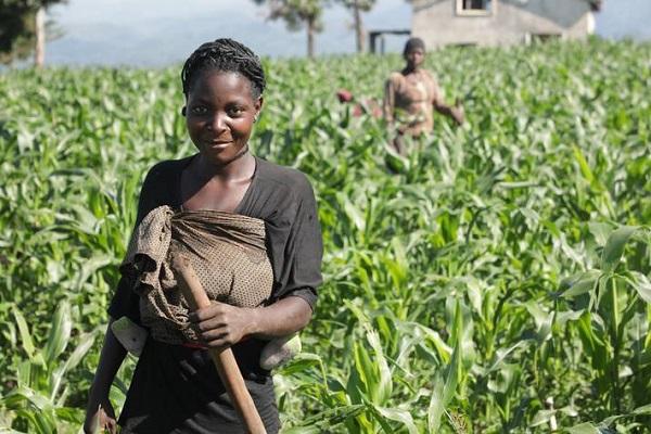 Elan de solidarité : l'Allemagne fait un don de 50 millions d'euros afin de renforcer la résilience en RDC