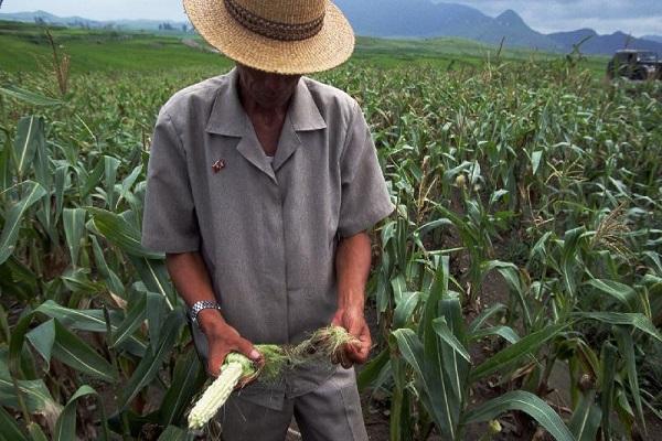 Patrimoine agricole mondial : un système agricole traditionnel du Brésil est désormais inscrit sur la liste de la FAO