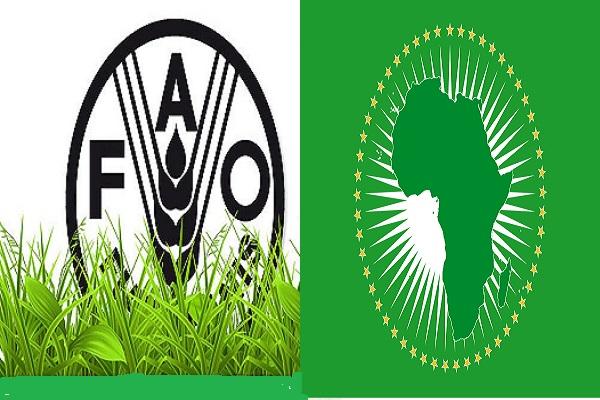 COVID-19 : une réunion ministérielle entre l'Union Africaine et la FAO annoncée pour ce Jeudi 16 avril 2020