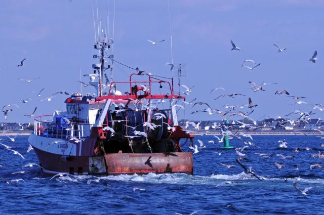 Pêche illicite Des ailerons de requins trouvés à bord de navires de pêche étrangers au cours d'une patrouille conjointe Greenpeace – Guinée