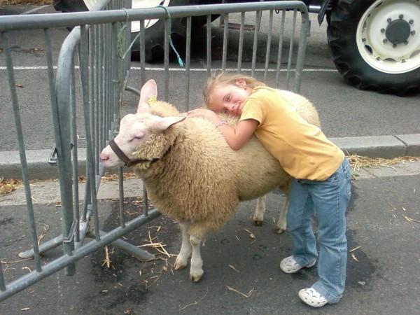 Humour : Qui a dit « fête des moutons ? »