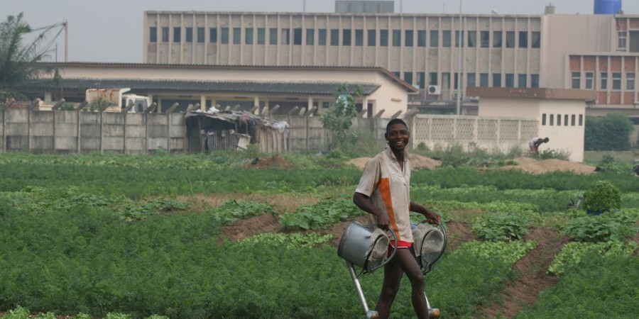 Côte d'Ivoire, Arménie et Colombie :  soutien de la FAO pour des investissements en faveur de projets agricoles pour réduire les émissions de gaz à effet de serre