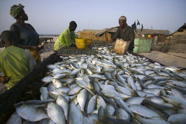 Pêche : Controverse autour d'une amende de 150 millions FCFA