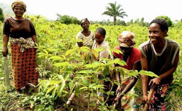 Journée internationale de la Femme rurale, Kilimandjaro, une initiative pour influer  sur les politiques foncières en leur faveur