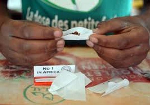Louga : la police démantèle un réseau de trafiquants, 10 kg de chanvre indien saisis
