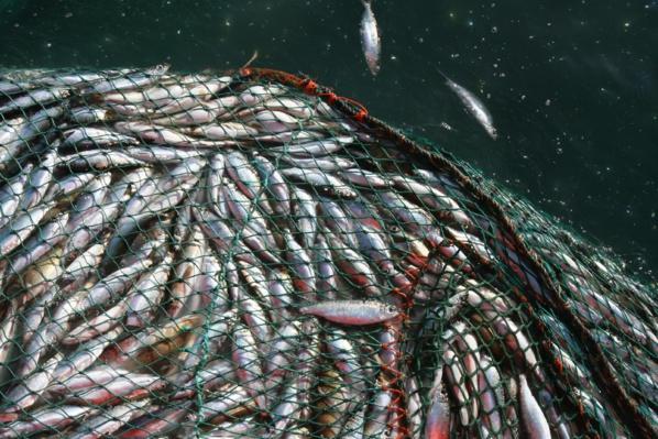 Pêche : Greenpeace Afrique demande une solution définitive face à la situation entre le Sénégal et  la Mauritanie