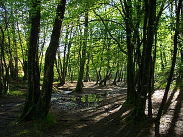 Transparence et accessibilité des informations mondiales sur les forêts : la  Norvège et la FAO œuvrent ensemble pour son amélioration