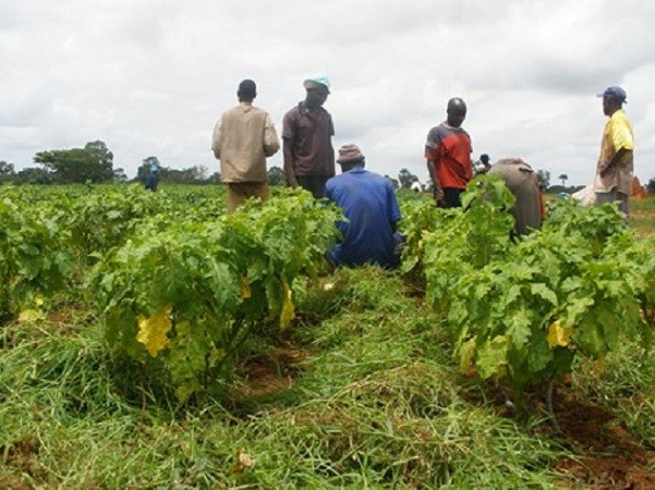 Sensibilisation : les agriculteurs en première ligne dans la lutte contre la résistance aux antimicrobiens