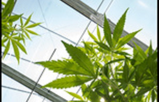 Estonie : la feuille de marijuana adoptée dans le logo d'une ville