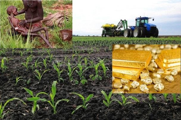Essor via l'agriculture : Comment les marchés agricoles et alimentaires peuvent-ils favoriser le développement durable?