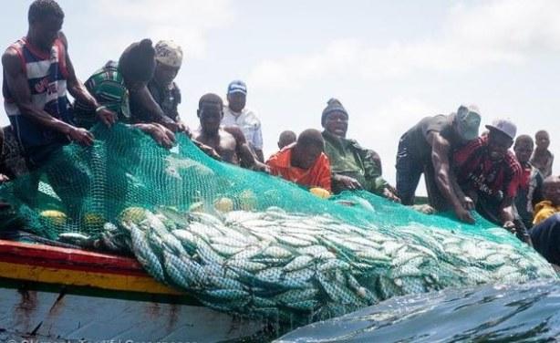 Nouveau rapport de la FAO : Les petits poissons sont d'une grande importance pour les lacs et rivières du continent africain