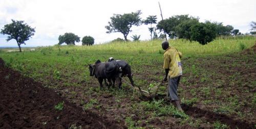 Agriculture : Le Burkina Faso et le FIDA lancent un nouveau projet pour booster la productivité rurale et les revenus des petits exploitants