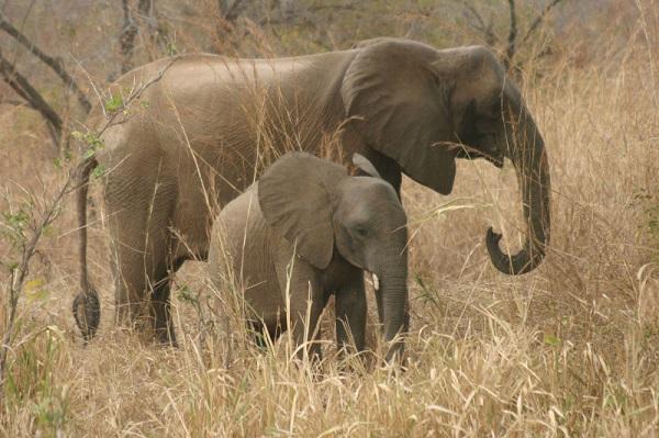 Zimbabwe : une touriste allemande, qui photographiait un éléphant, piétinée à mort