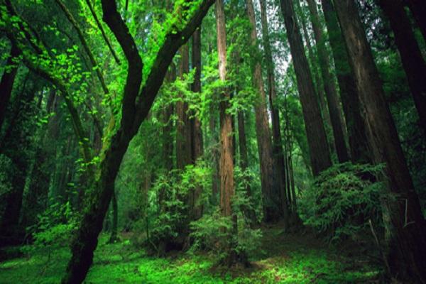 Nouveau rapport de la FAO : La gestion des forêts du monde doit être centrée sur l'eau
