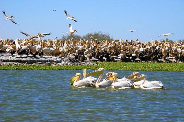Découverte : Le Delta du Saloum, l'une des plus importantes zones touristiques au Sénégal