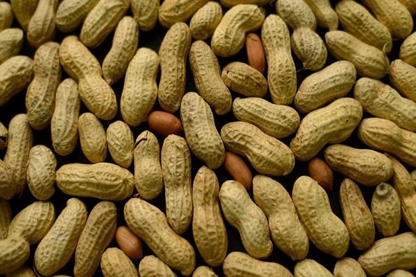 Sénégal : la guerre de l'arachide fait rage entre les exportateurs chinois et les huiliers locaux