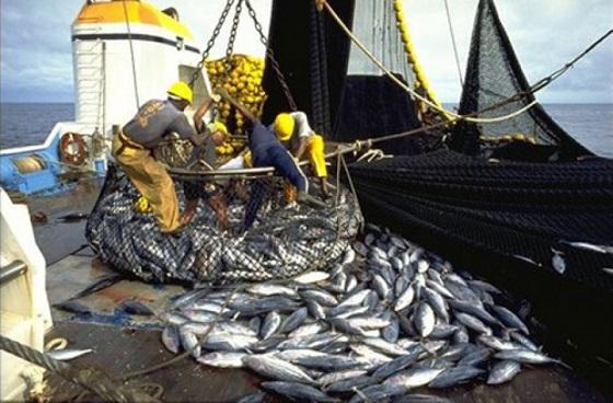 Pêche : Une  baisse des débarquements enregistrée au troisième trimestre 2017
