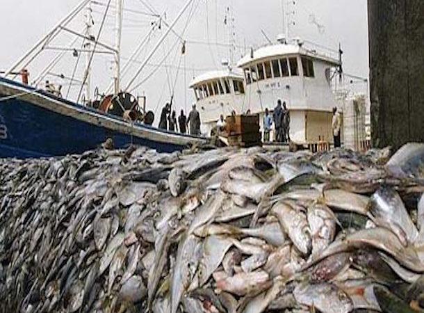 Situation mondiale des pêches et de l'aquaculture : La FAO lancera son nouveau rapport le 8 juin 202