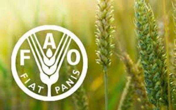 Cérémonie de remise des prix : la FAO récompense des pionniers de la sécurité alimentaire