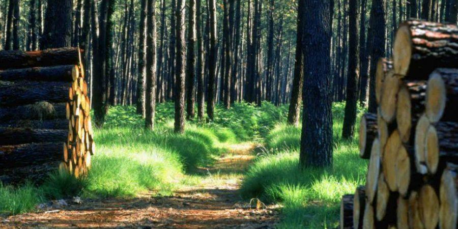 Dégradation de L'environnement :   45 000 ha de forêts perdus annuellement au Sénégal