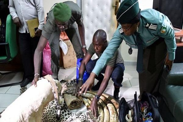 Espèces protégées : La Cote d'Ivoire annonce l'arrestation de 17 trafiquants