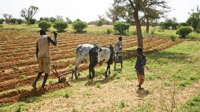 SÉCURITÉ ALIMENTAIRE :  Prôner des politiques agricoles durables dans toute l'Afrique pour mettre un terme à la faim