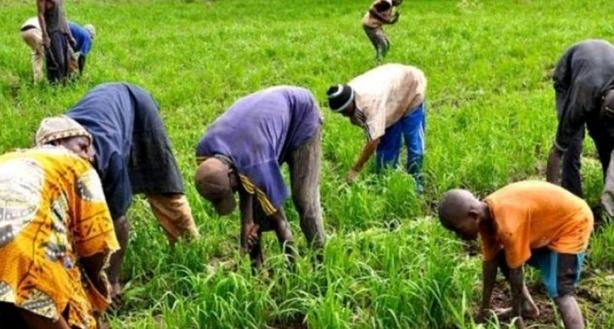 Pour l'atteinte des objectifs de développement Durable (ODD) :  Les producteurs ruraux en formation pour le suivi et l'approbation de l'agenda 2030