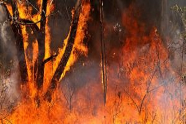 Environnement : l'Amazonie dévastée, Avaaz charge lourdement Jair Bolsonaro, le président d'extrême droite du Brésil