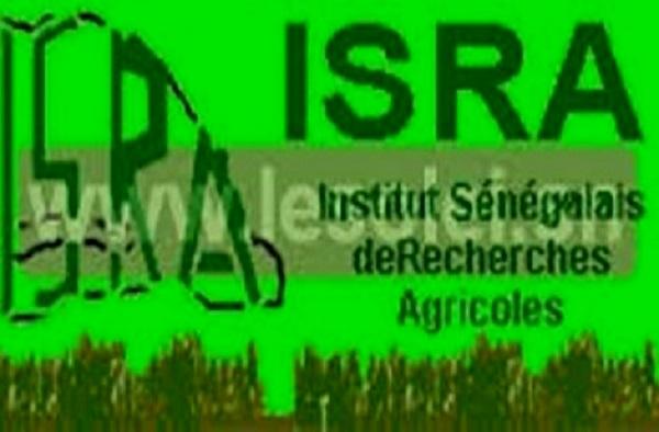 La recherche agricole sénégalaise en bonne pole: Les chercheurs de l'ISRA font le plein au Cames 2019 à Bangui en République Centrafricaine