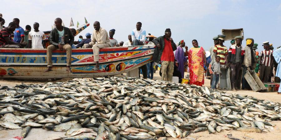 Transparence dans la gouvernance des pêcheries :  Le Sénégal vers la désignation de l'autorité en charge de la FiTI