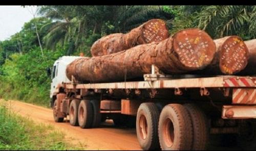 A CAUSE DU TRAFIC DE VENE DU SENEGAL :  CMA CGM suspend ses exportations de bois en Gambie