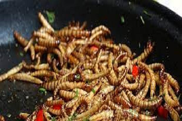Des insectes destinés à la consommation humaine : l'Europe donne son feu vert