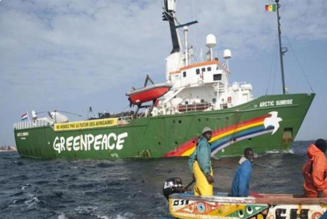 Nouvelles usines de farine et d'huile de poisson : Greenpeace Afrique et les  pêcheurs du Sénégal condamnent leur implantation